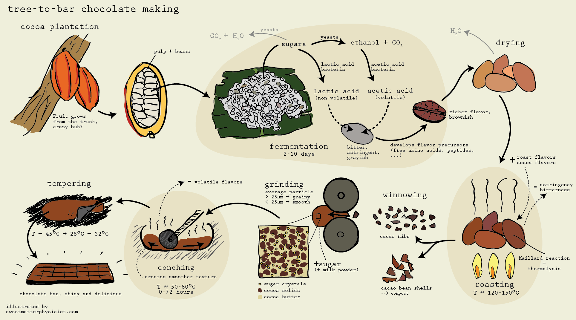 How It S Made Chocolate From Cocoa Beans